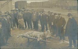 42 ROANNE / Un Lyon Mort Sur Un Brancard Sur Le Quai D'une Gare /CARTE PHOTO ANIMEE - Roanne