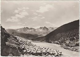 Andorre , Andorra : Vue  , Troupeau  D E  Mouton - Andorre