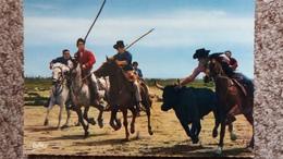 CPSM CHEVAL CHEVAUX EN CAMARGUE LES GARDIANS ED RELLA TAUREAU - Horses