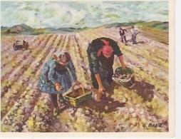 20 / 3 / 155. -  G  BAUR,  LANGNEAU  A. - PLANTAGE D ES  POMMES   DE  TERRE   - PRO  INFIRMIS- -  C P M - Paintings