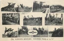 France - 56 - Les Hardys Béhélec Hounds - Hardy Qui S' Y Fie - Frankreich