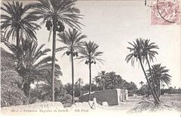 CP D'Algérie : Oasis Palmiers :régimes De Dattes. - Algérie