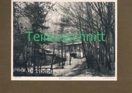 421 Anninger Schutzhaus Hütte Naturfreunde Mödling Lichtdruck 1908 !! - Non Classificati