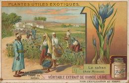 Extrait Liebig Chromo Culture Safran Turquie Saffron Culture . Size 11 By 7 Cms - Medicinal Plants