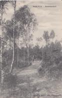 PUTTE 1917 BIEDUINENHOF LAANTJE IN HET BOS MET JONGEN - HOELEN KAPELLEN 7094 - Kapellen