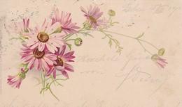 AK Astern Blumen - 1903 (47949) - Fleurs