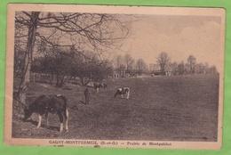 CPA GAGNY MONTFERMEIL Prairie De Montguichet Vache Laitière 93 Seine Saint Denis ! Taches ! - Gagny