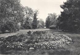 CPM Montesson Ecole Th Roussel Jardin Anglais - Montesson