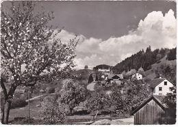 SCHELLENBERG - LIECHTENSTEIN -78060- - Cartes Postales