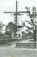 Bellingwolde; Molen (Mill) - Niet Gelopen. (H. Wal - Winschoten) - Niederlande
