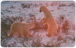 MALAWI A-042 Magnetic Telecom - Animal, Polar Bear - FAKE - Malawi
