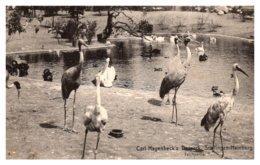 Herons, Carl Hagenbeck's Teichpartie, Sreillgen, Hamburg - Other