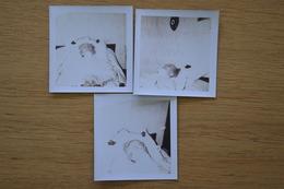Post Mortem Homme Mort Sur Son Lit Décès Lot De Photos 8.5 X 8.5 - Photos