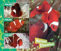 Palau   2019 Fauna  Maroon Clownfish  I202001 - Palau