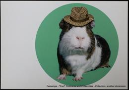 Famous Faces TAKKODA Pets Celebrity Photography Célébrités Animal Photographie Cobaye Avec Chapeau Guinea Pig With Hat - Animaux Habillés
