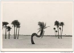 Algérie : El Goléa - Sahara 1983 (Bernard Descamps Photographes) Coll Aspects Du Paysage N°6 - Algiers