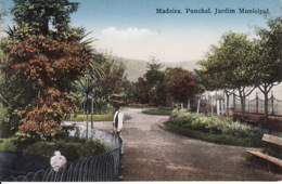2671142Madeira, Funchal Jardim Municipal - Madeira