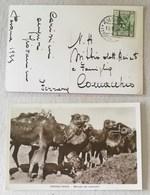 """Cartolina Illustrata """"Tripolitania, Mercato Dei Cammelli"""" Per Comacchio - Pasqua 1935 - Libia"""