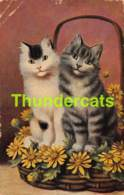CPA ILLUSTRATEUR  CHAT CHATS SPERLICH ARTIST SIGNED CAT CATS KAT KATTEN KATZE KATZEN   ( PLI - CREASE - PLOOI ) - Gatti