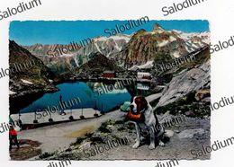Valle D'aosta - Gran S. Bernardo - Svizzera - Cane Dog Auto Car Maggiolone - Italy