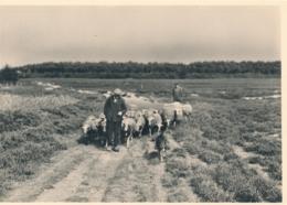 Nederland - 1946 - 5 Op 7,5 Cent Veth, Fotokaart Vierhouten (schapen) Op De Heide, Briefkaart G287b - Ongebruikt - Ganzsachen