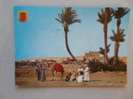 MAROC TYPIQUE ( MAROC ) CHAMEAUX DANS UN OASIS  BELLE ANIMATION  VOYAGEE 1970 - Morocco