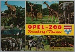 Kronberg Im Taunus - Opel Freigehege Für Tierforschung 2   Opel Zoo - Kronberg