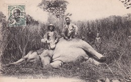Laos Ou Cambodge Eléphant Tué Dans La Jungle Indochine Chasse Hunting Indochina - Laos