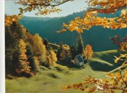 *** CALENDRIER 1974*** Reflets D'Automne   14x20cm --carte Postale Géante Calendrier Au Dos Offert  éditions  YVON - Grand Format : 1971-80