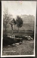 Gams/ Rheintal Pilgerbrunnen Mit Schafen/ Fotokarte/ Scan Beachten - SG St. Gall