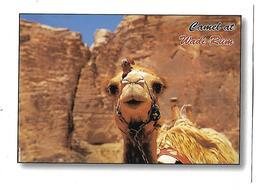 JORDNIE---JORDAN---camel At Wadi Rum---voir 2 Scans - Jordanie