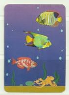1994 Pocket Calendar Calandrier Calendario Portugal Peixes Fishes Poissons Pez - Calendriers