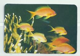 1995 Pocket Calendar Calandrier Calendario Portugal Peixes Fishes Poissons Pez - Calendriers