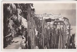 Monaco - Vue Prise Du Jardin Exitoque - Kathedrale Notre-Dame-Immaculée