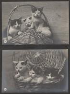Katzen - 2 S/w AK Um 1920 - Chats