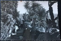 Monaco. Jardin Exotico. - Exotic Garden