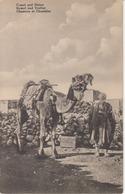 CHAMEAU Et CHAMELIER - KAMEL Und TREIBER - Ägypten