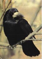 Bird, Raven - Oiseaux