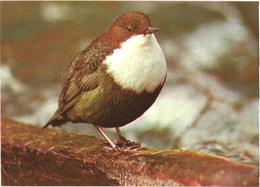 Bird On Tree, 1987 - Oiseaux