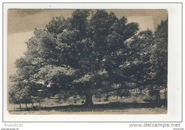 Carte De Augan Chêne Séculaire Couvrant 450 Mètres Carrés ( Peu Courante ) - France