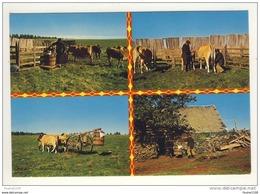 Carte ( Format 15 X 10,5 )  La Traite Au Parc Sur Les Monts D' Auvergne ( Vache  Région D' Aubrac Je Pense ) Recto Verso - Francia