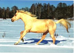 Running White Horse In Snow - Cavalli