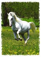 Running White Horse - Cavalli