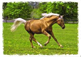 Running Brown Horse - Cavalli