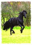 Running Black Horse - Cavalli