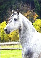 White Horse Looking - Cavalli
