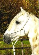 Looking White Horse - Cavalli