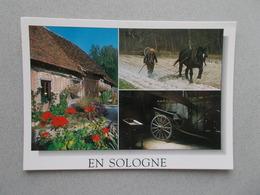 EN SOLOGNE  LE TERROIR SOLOGNOT LA LOCATURE DE LA STRAIZE PAYSAN AU TRAVAIL ATTELAGE - Centre-Val De Loire