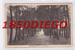 CASTIGLIONCELLO - VIALE PINETTA  F/PICCOLO VIAGGIATA ANIMATA - Livorno