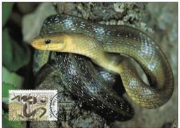 Moldavie : CM Carte Maximum WWF Reptile Serpent Elaphe Longissima Couleuvre Esculape Aesculapian Snake Askulapnatter - Moldavie